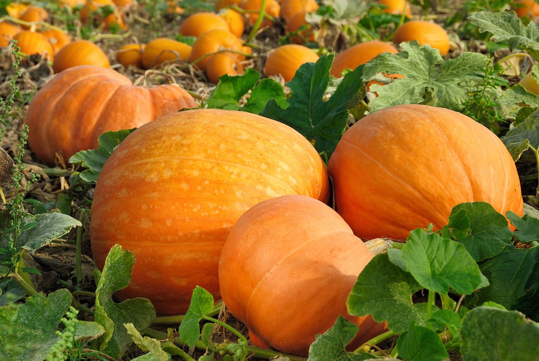 Saisonale Lebensmittel im Herbst und Winter